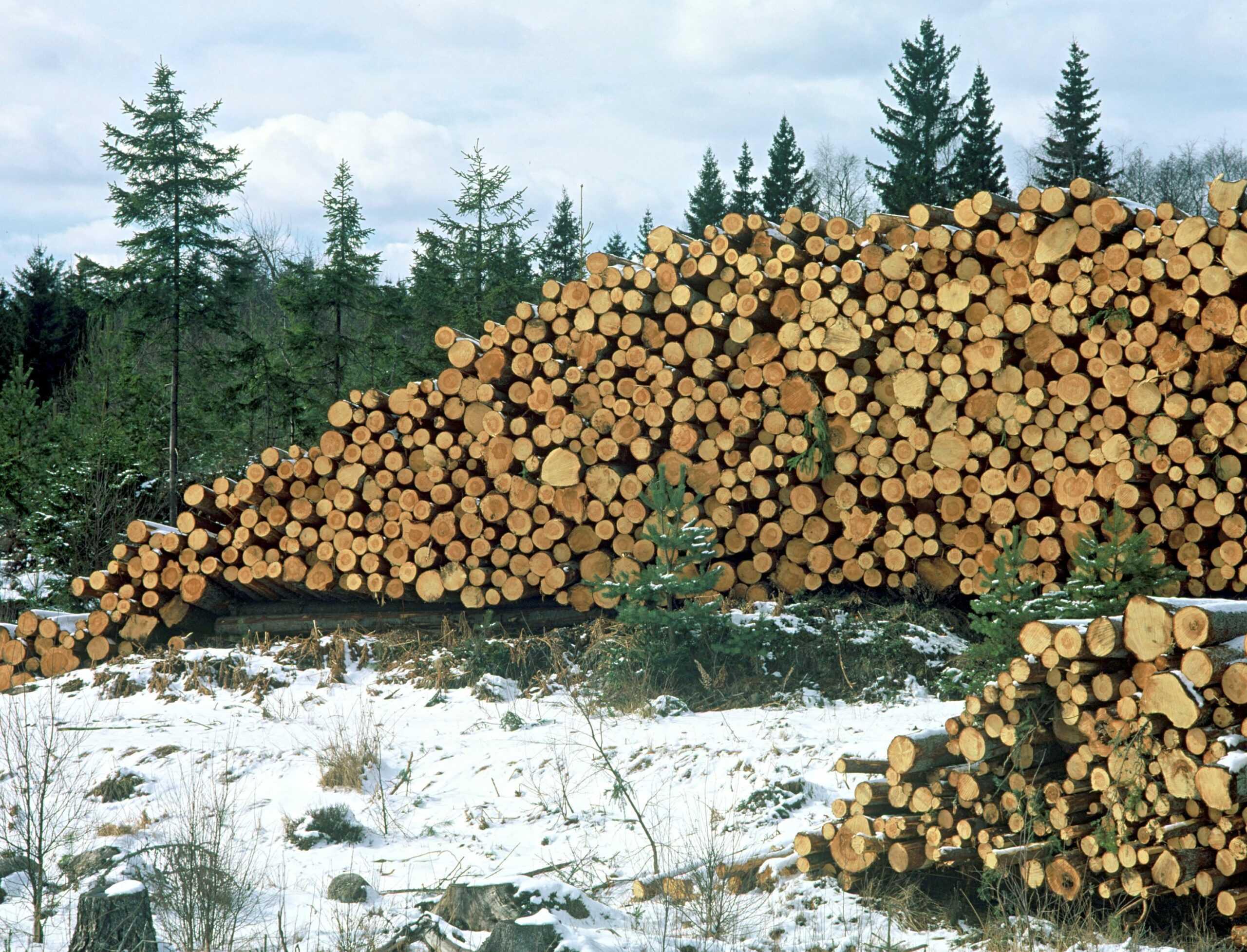 88 åtgärder ska öka tillväxten i skogen med 20 procent 1
