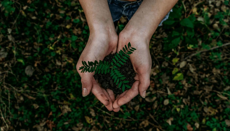 Knowit stärker hållbarhetsarbetet ytterligare